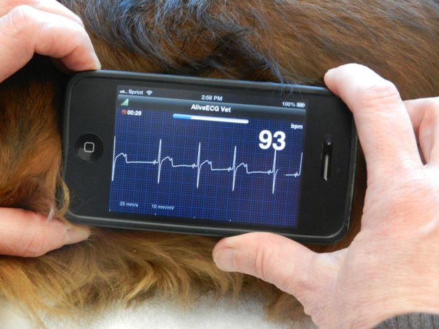 Pet Vet St Cloud health medical tests testing
