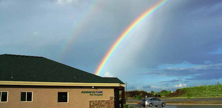 Veterinarian at the end of the rainbow St Cloud MN Veterinary Clinic