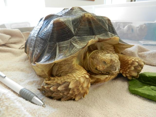 exotic pets wel e here advanced care pet hospital