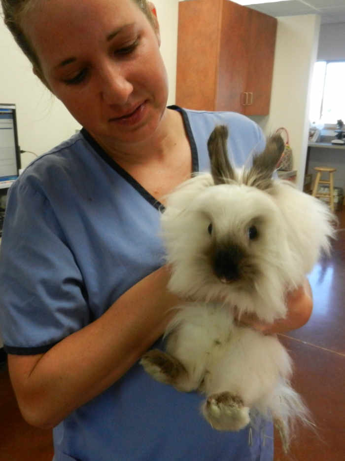 Exotic Pet Veterinary Care in St. Cloud Minnesota